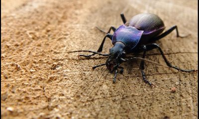 3 ground up beetles top 10 gross food facts