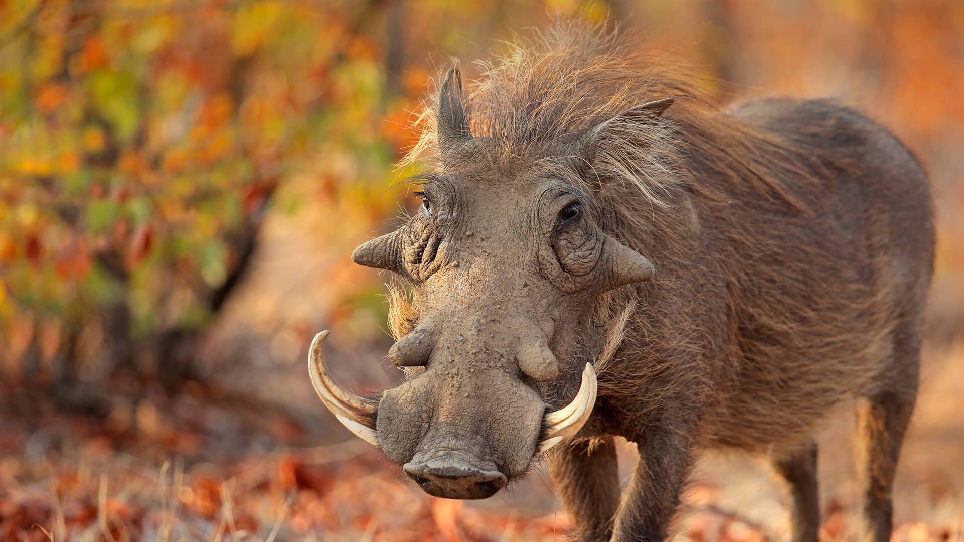 anthony bourdain exotic foods warthog anus mystery meat