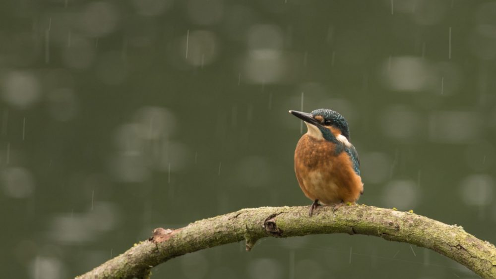 bird on a branch in the rain