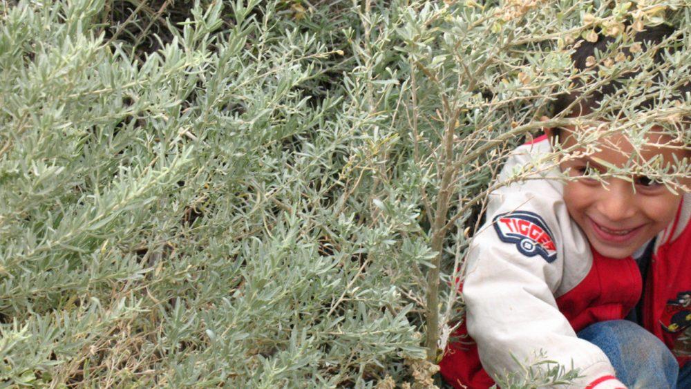 boy hiding in bush