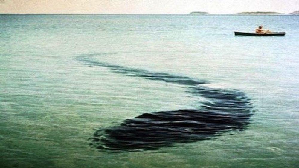 unexplained photos snake creature