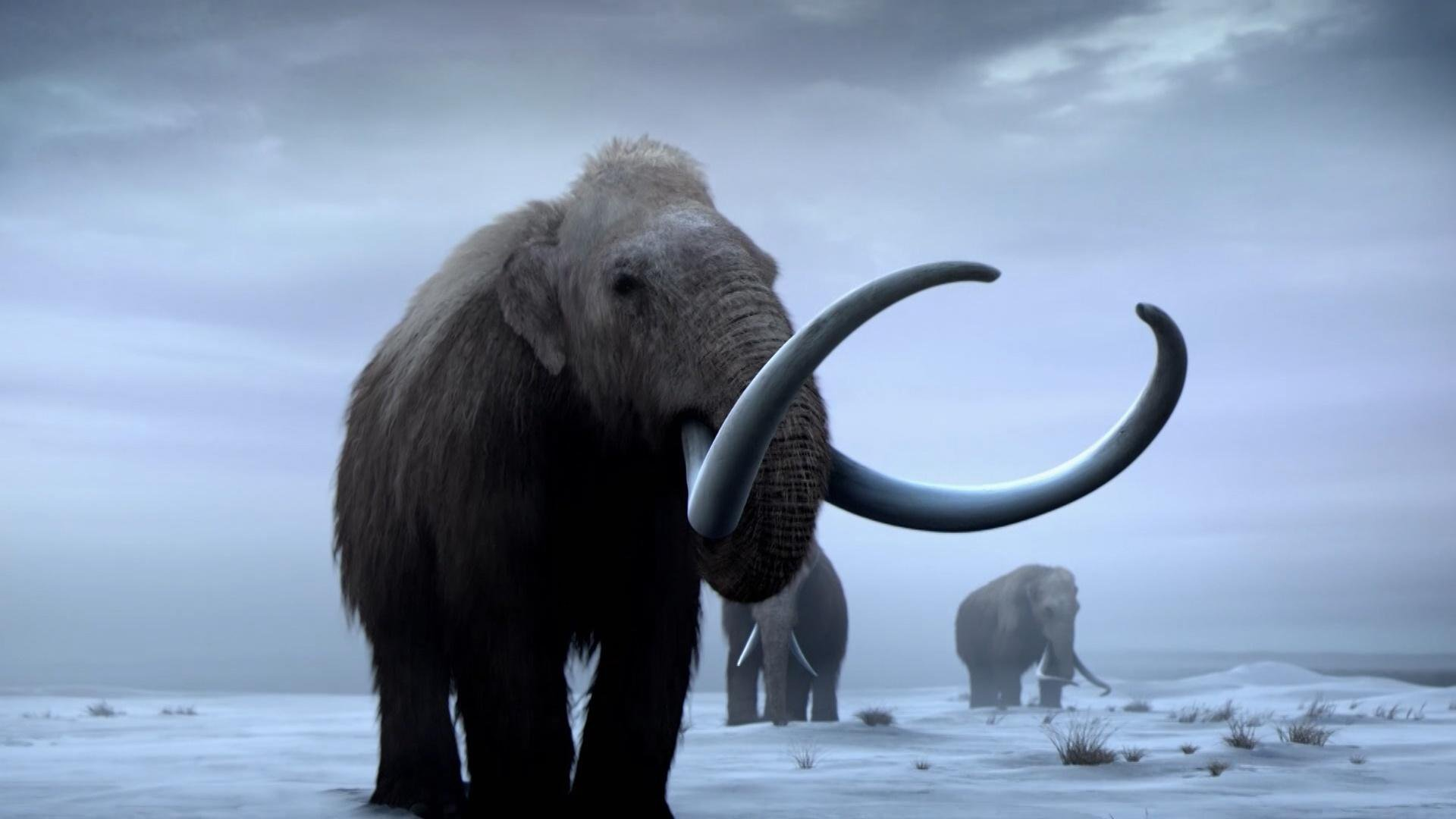 woolly-mammoths