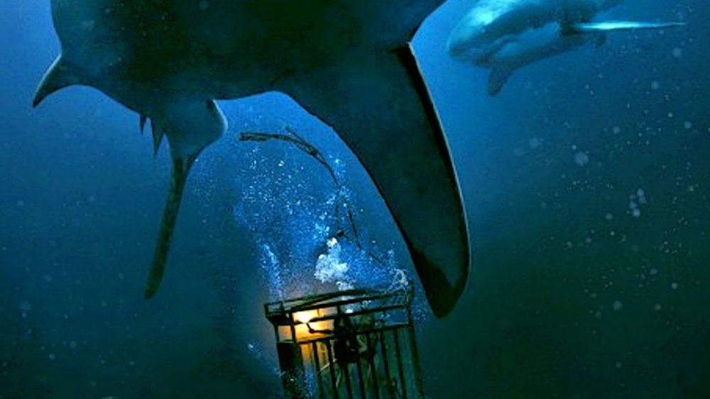 shark movies 47 meters down