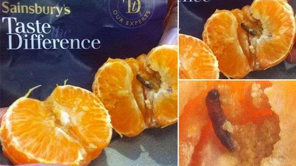 mandarin bug eggs Cropped