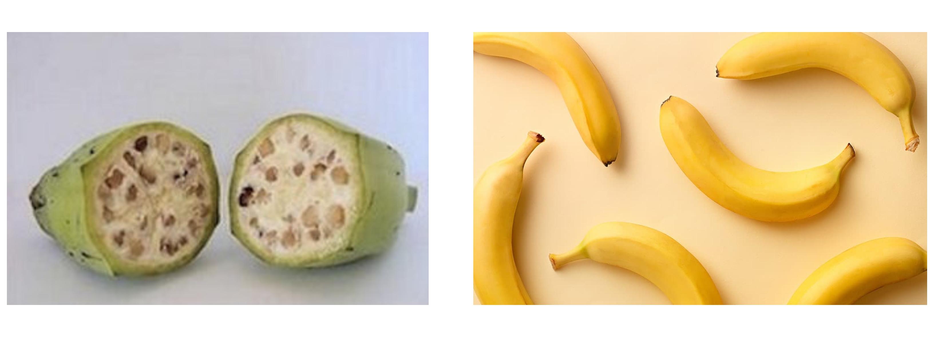 Old+new banana