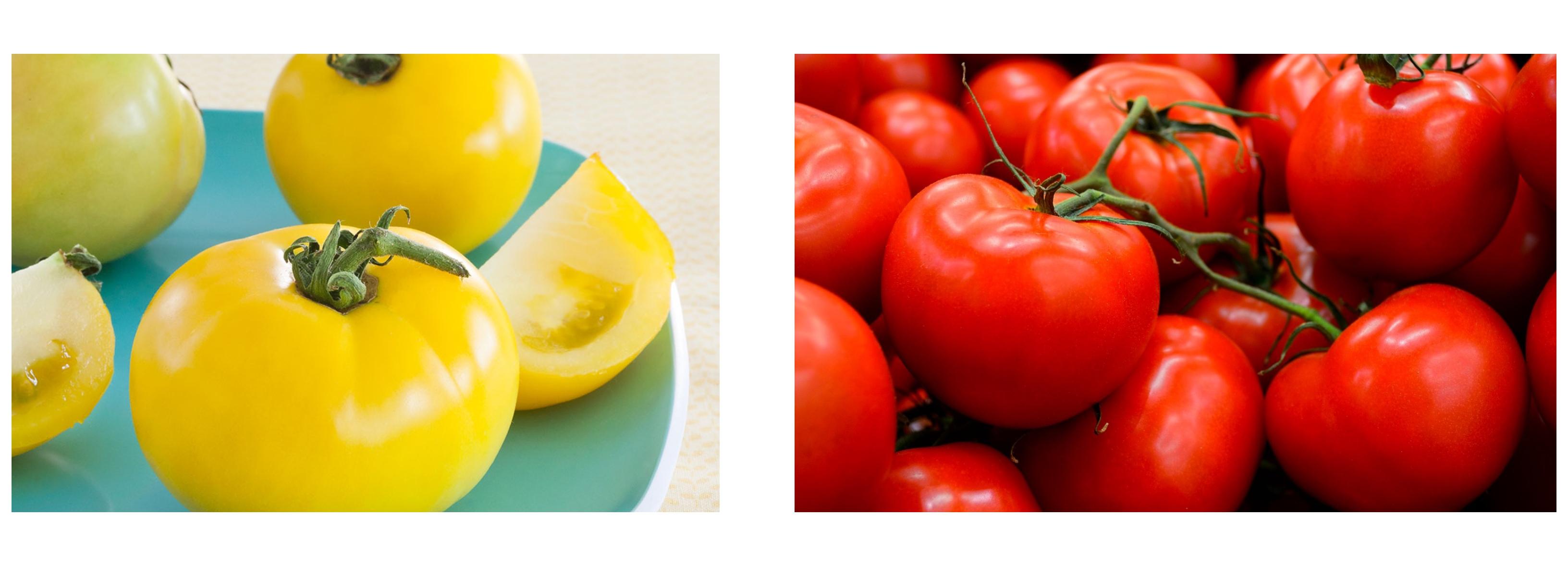 Old+new tomato