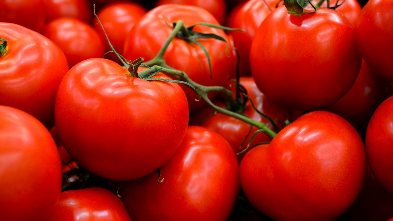 new tomatoe