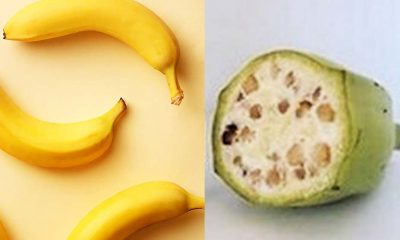 old banana seeds - Vs - new bananas