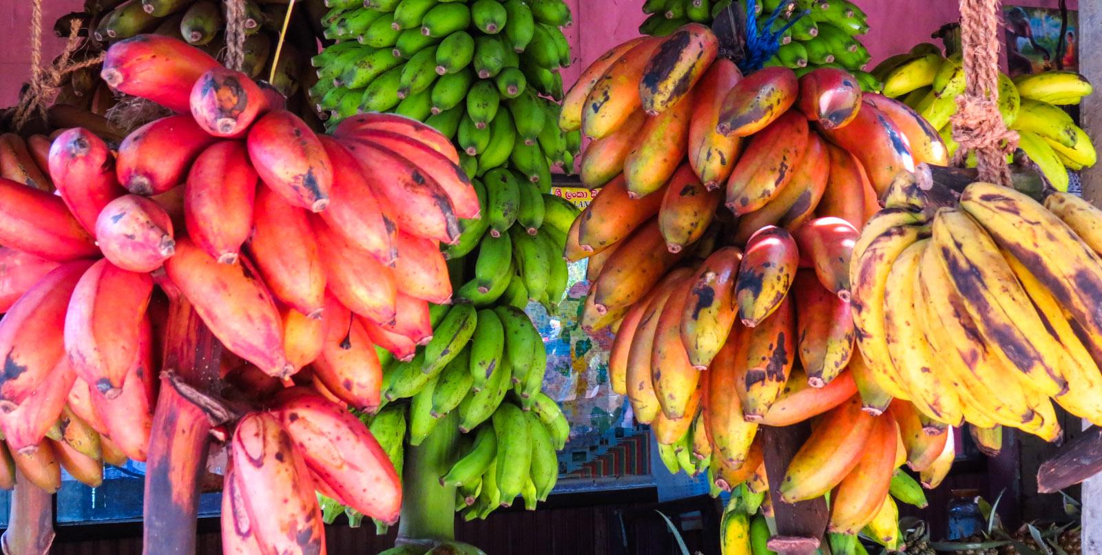Red Bananas – Kandy, Sri Lanka