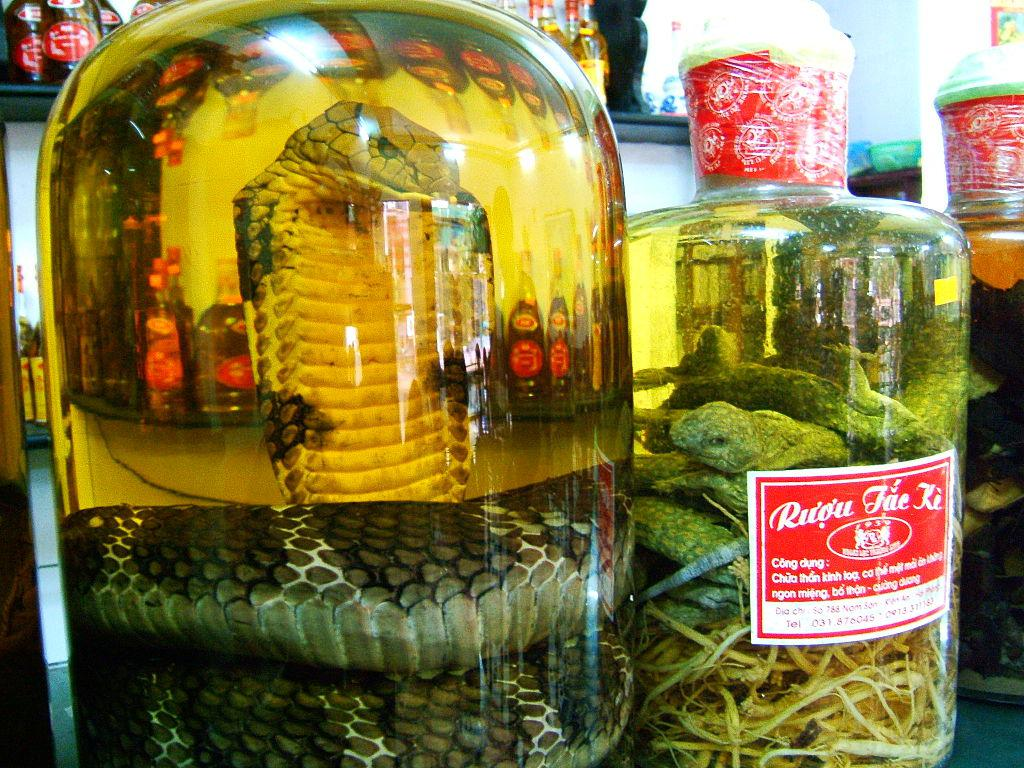 SNAKE WINE - 10 Street Foods That Would Scare American Tourists