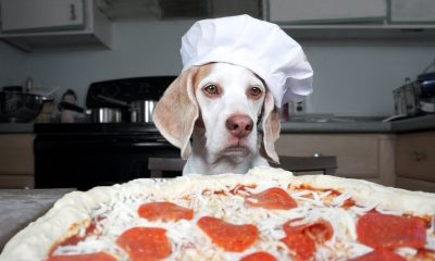Animals love pizza too