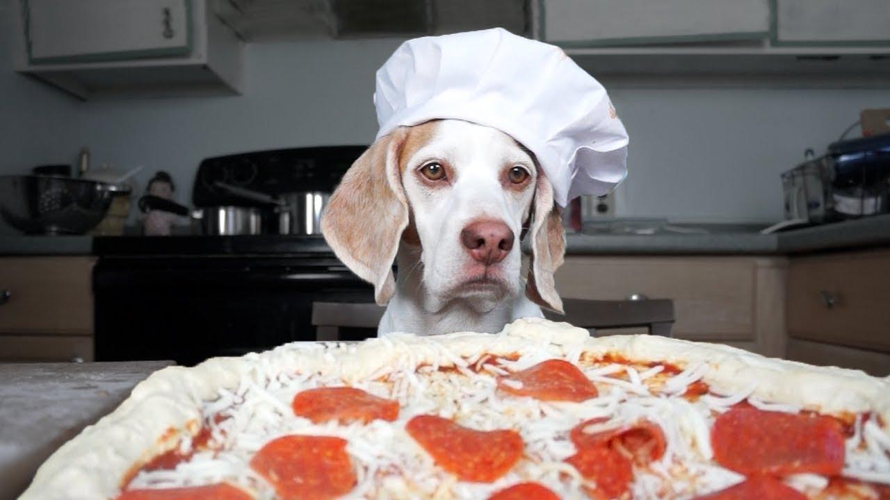 Animals love pizza too