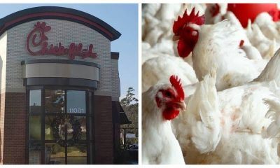 Fast food chicken is big business.